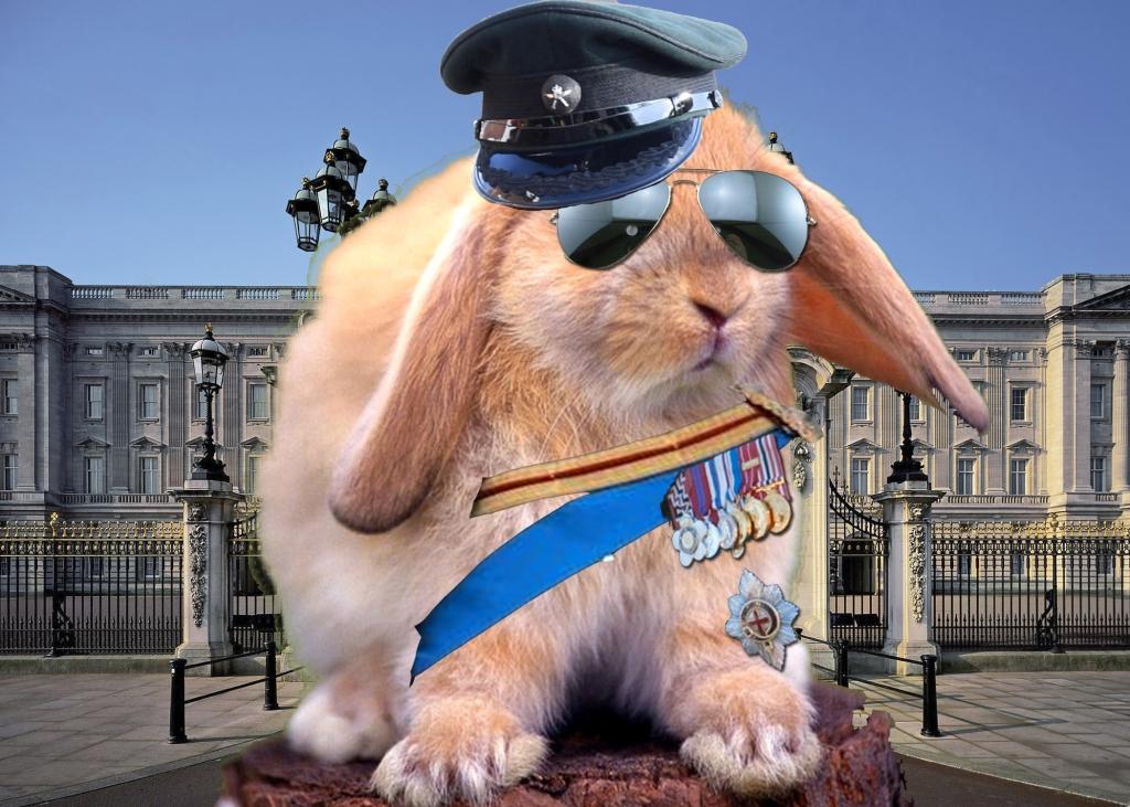 General Grumpy Bunny
