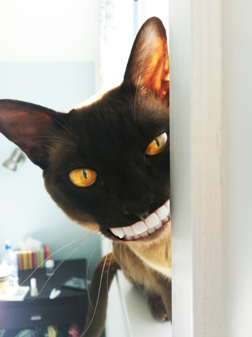 Cheshire Cat In Real Life