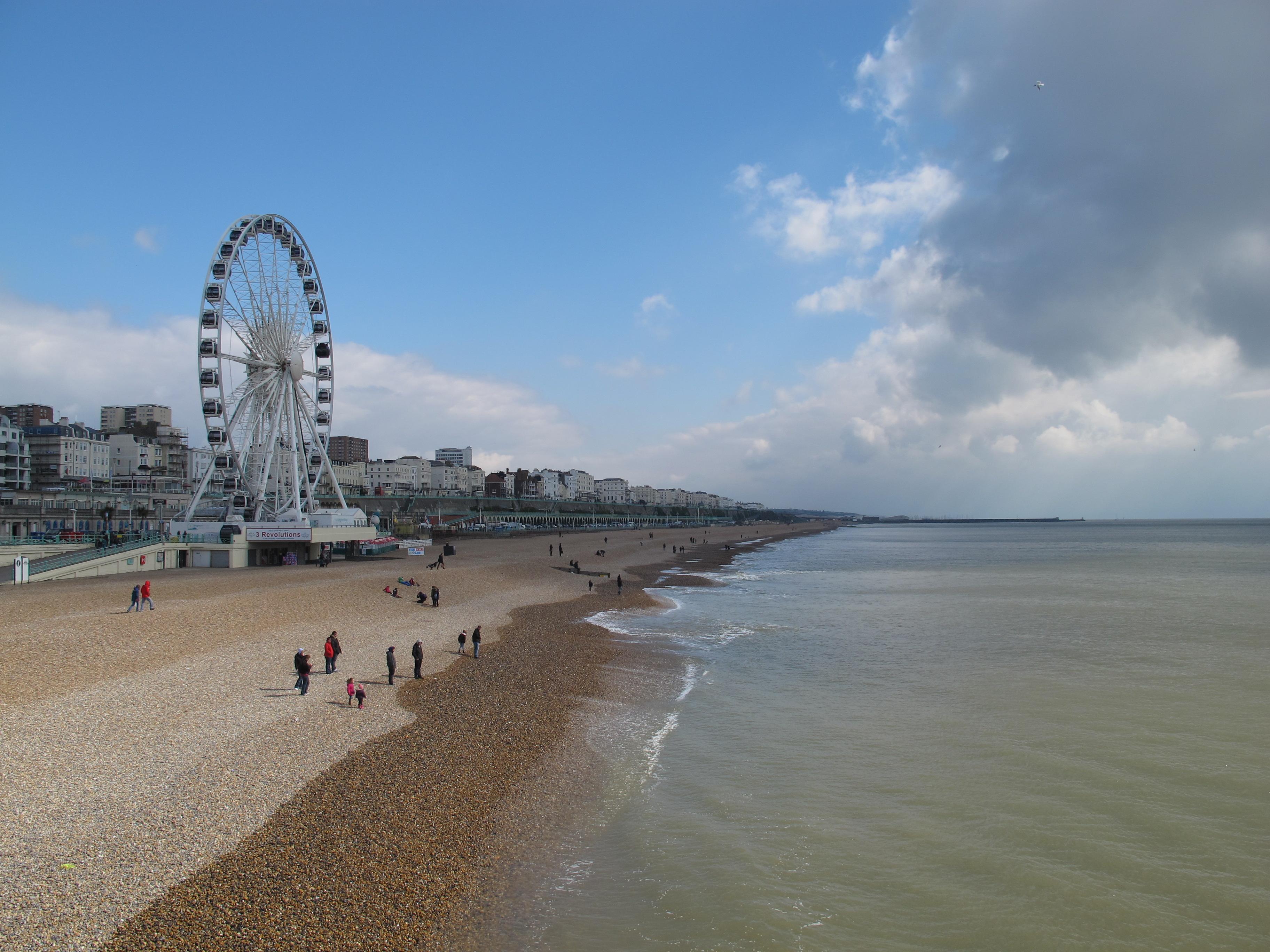 Brighton runawaykiwi for The brighton